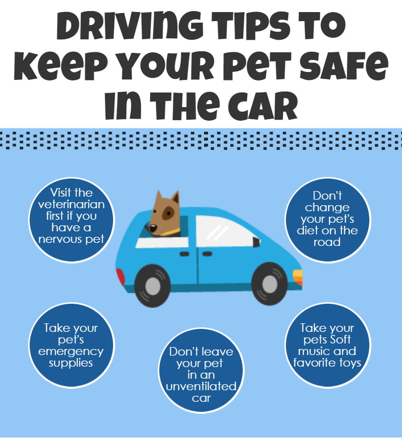Driving Tips to Keep Your Pet Safe in Car